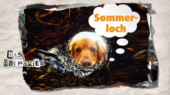 """Teasergrafik Altpapier vom 20. Juni 2019: Hund schut in ein """"Sommerloch"""""""