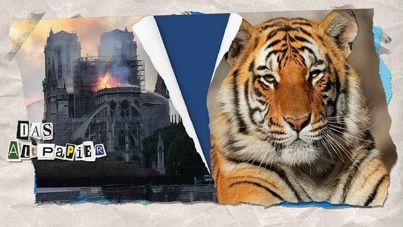 Collage zur Medienkolumne Das Altpapier vom 17. April 2019: brennende Kathedrale Notre-Dame und Tigerkopf