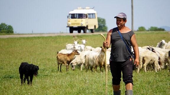 Ein Schafhirte führt seine Herde über ein Feld, im Hintergrund eine Straße auf der ein Bus fährt.