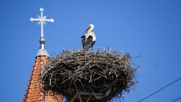 Ein Storch sitzt im Horst, im Hintergrund eine Kirchturmspitze mit Kreuz,