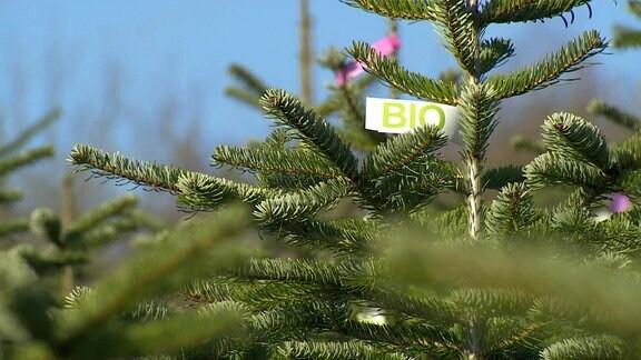 Weihnachtsbaum mit Bio-Siegel