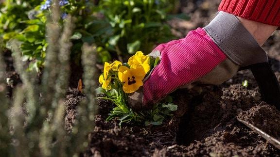 Frühjahrsarbeiten im Garten.