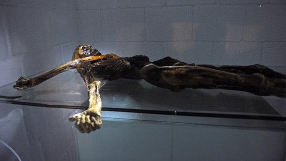 Gletscher-Mumie im Südtiroler Archäologiemuseum in Bozen - Ötzi in der Kältekammer