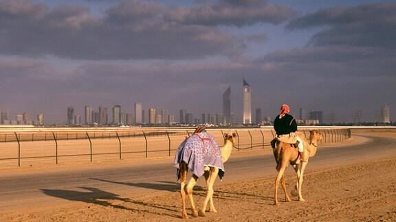 Kamele in Dubai