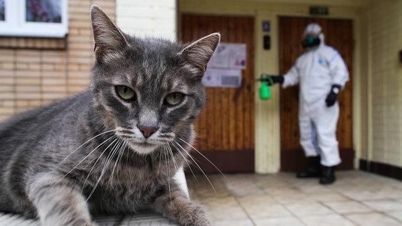 Eine Katze vor einem Mann in Schutzanzug