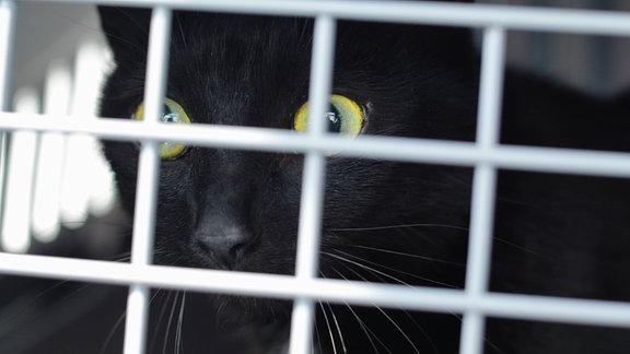 Eine schwarze Katze in einem Transportkäfig