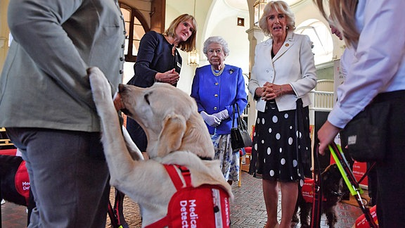 Königin Elizabeth II. Und die Herzogin von Cornwall anlässlich des 10-jährigen Jubiläums der Wohltätigkeitsorganisation Medical Detection Dogs im Royal Mews in London.