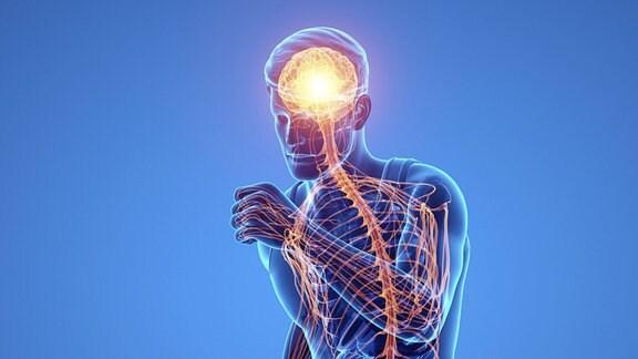 Das männliche Nervensystem
