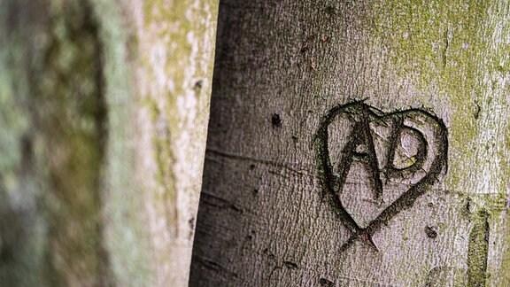 In Baum geschnitztes Herz mit Initialien