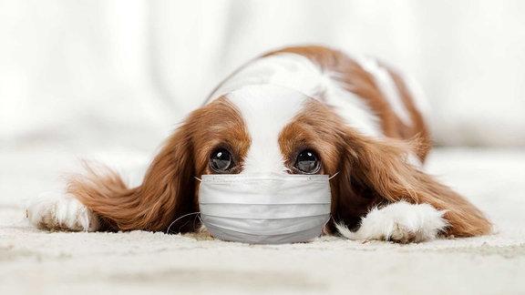 Ein Hund mit Maske