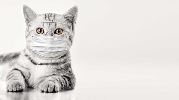 Eine Katze mit Maske und Schutzbrille