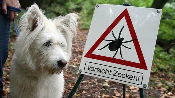 Mischlingshund Mikki geht an der Leine an einem Warnschild vorbei, das 2008 auf Zecken-Gefahr aufmerksam macht.