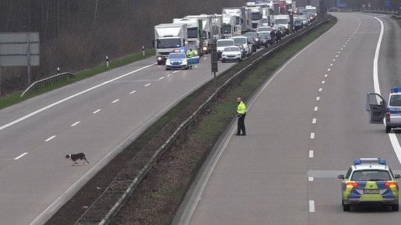 Polizisten beobachten einen freilaufenden Hund, der über die gesperrte Bundesautobahn 29 läuft.