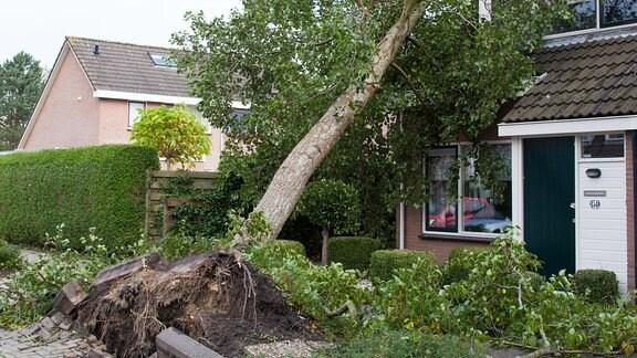 Entwurzelter Baum ist auf ein Haus gestürzt