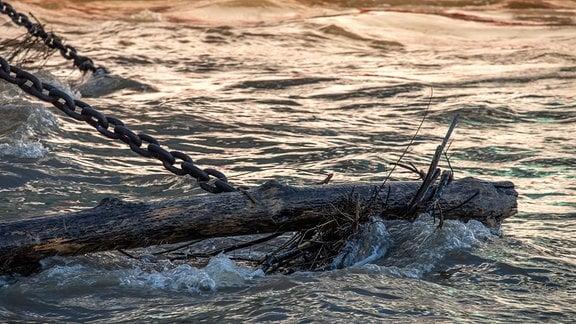 Treibholz in einem Fluss