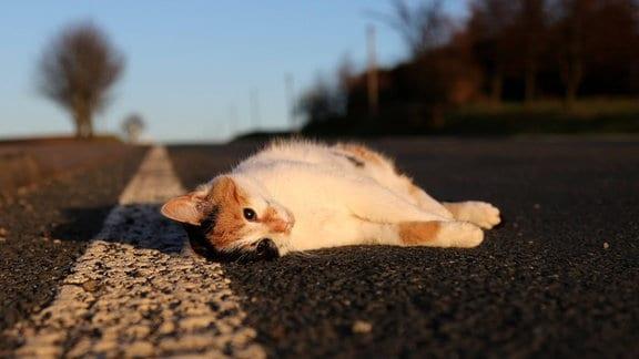 Eine überfahrene Katze liegt am Straßenrand.