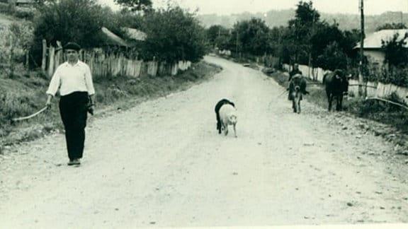 Entlang des Weges laufen Männer mit ihrem Vieh.