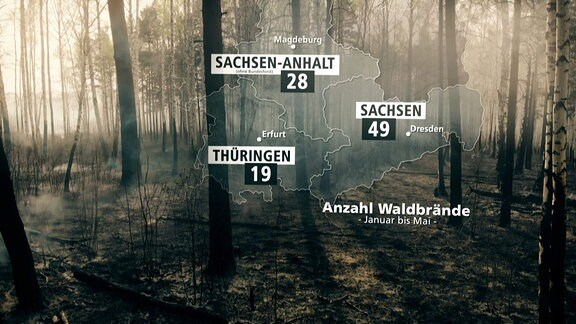 Feuerwehren in Not - Gefährliche Waldbrandbekämpfung /Grafik