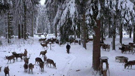 Wild im Wald - Was treibt die Jäger an?