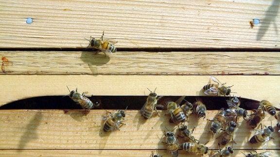 Bienen fliegen in und aus einem Schlitz einer Kiste.