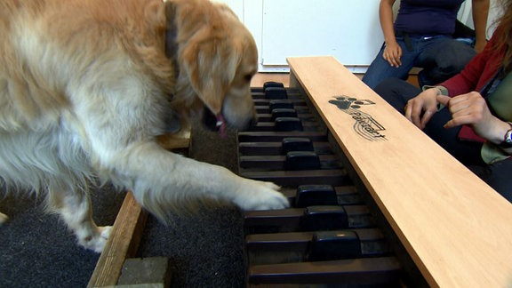 Ein Hund tippt auf Tasten an einer Klavier-Konstruktion.