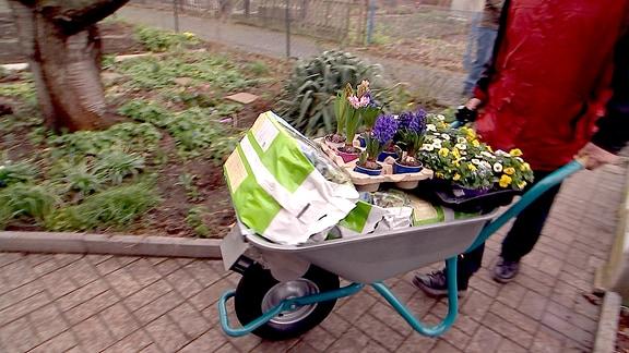 Schubkarre mit Blumen und Erde