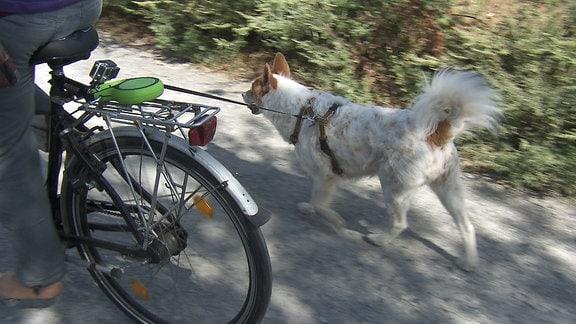 Ein Hund läuft neben einem Fahrrad her.