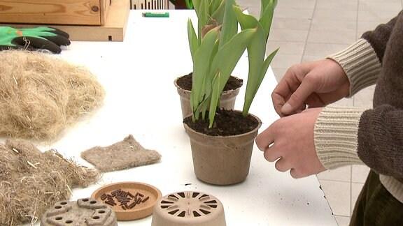 Eine Person bepflanzt einen Blumentopf aus Hanf.