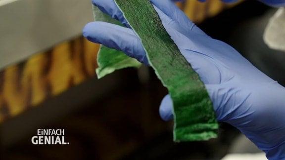 ein Trägermaterial, auf dem Algen wachsen