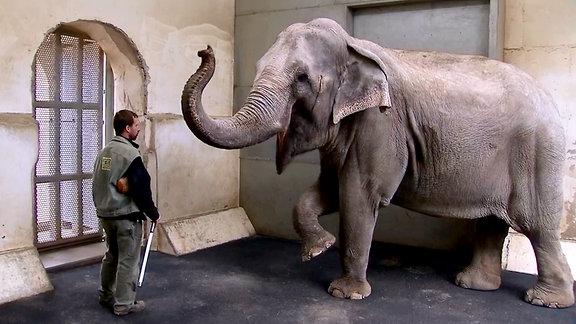 Elefant zeigt Kunststückchen