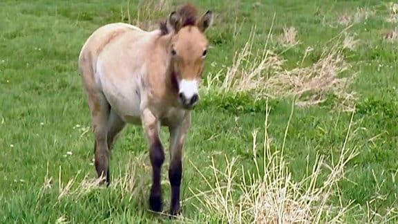 ETC_erste_Folgen_6 - Pferde auf Trab