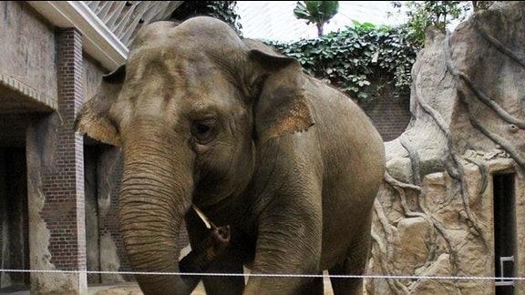 Elefantendame Hoa