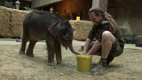 Schlammbad fürs Elefantenbaby