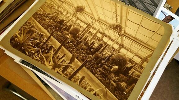 schwarz/weiß-Fotografie der Kakteensammlung in den Grusonschen Gewächshäusern