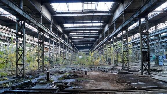 Marode Fabrikhalle, in der Bäume wachsen