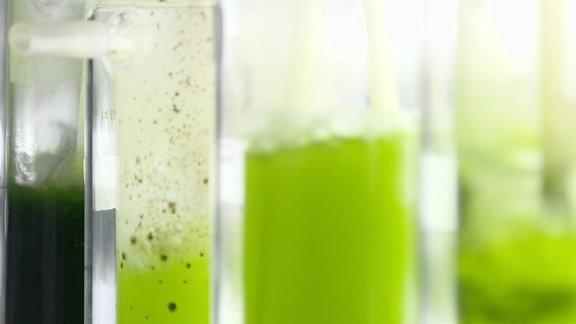 Algen-Kraftstoff aus Köthen