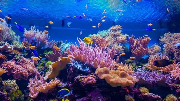 Unterwasserfauna an einem Korallenriff