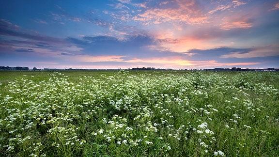 Sommerwiese und dunkler himmel