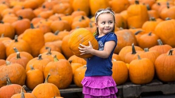 Ein kleines Mädchen schleppt eine Kürbis. Im Hintergrund befinden sich zahlreiche weitere Kürbisse.
