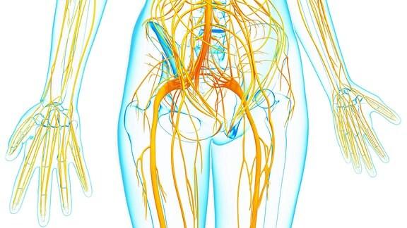 Grafische Darstellung des menschlichen Nervensystems.