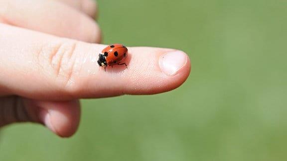 Auf dem ausgestreckten Zeigefinger eines Kindes sitzt ein Marienkäfer.
