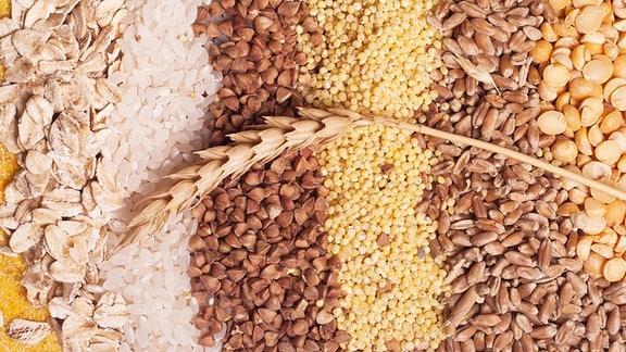 Viele Getreidekörner nebeneinander.