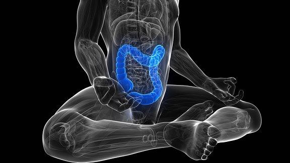Computergrafik: Darm im Körper eines Menschen