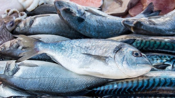 Dorade, Makrelen und andere Fische.