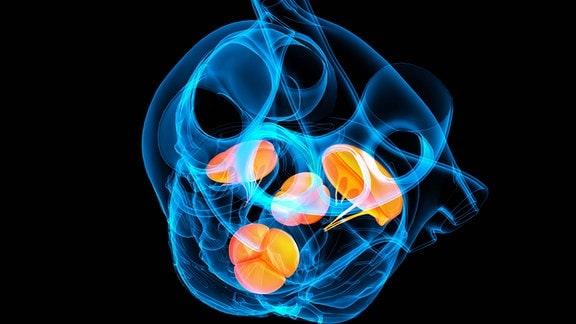 grafische Darstellung der Anordnung der Herzklappe in einem menschlichen Herzen