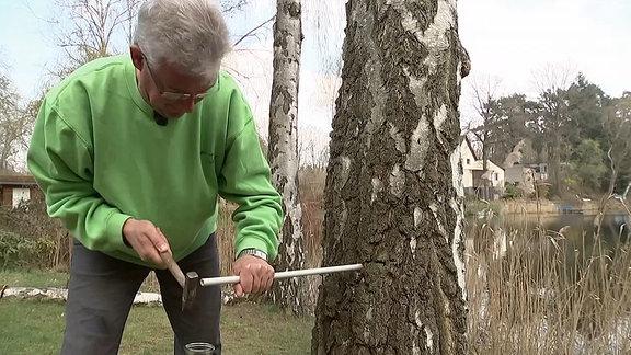 Ein Mann schlägt ein Plastikrohr in eine Birke