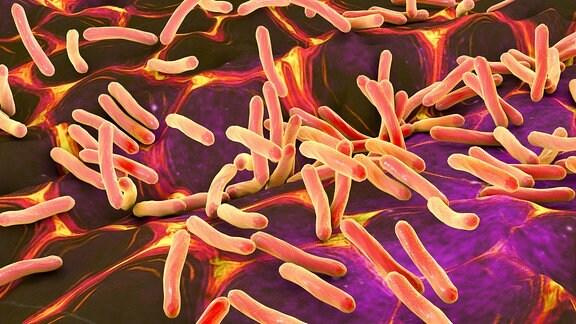 Illustration von stabförmigen Bakterien auf Haut oder Schleimhaut