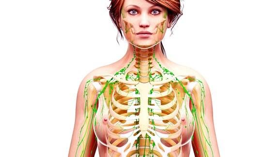 Lymphsystem einer Frau