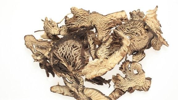 getrocknete Wurzelstücke der Traubensilberkerze