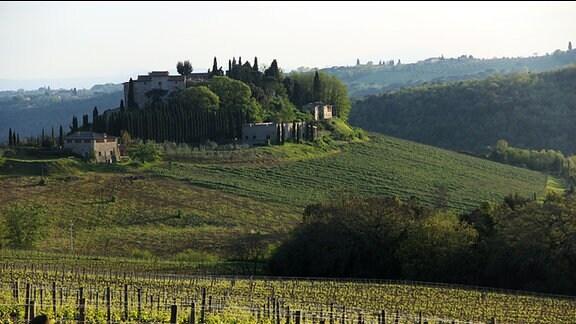 Gebäude im italienischen Stil in toskanischer Landschaft auf einem Hügel. Im Vordergrund sind mehrere Weinstöcke zu sehen.